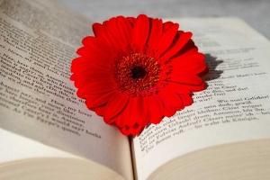 Nowe książki z gatunku literatury kobiecej