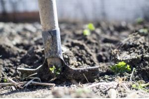 Prace ogrodowe w lecie