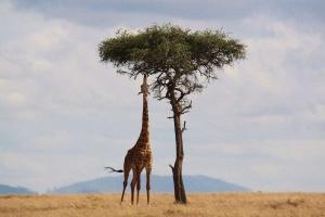 Szczepienia przed wyjazdem do Afryki i Azji. Jak dbać o zdrowie w tropikach?
